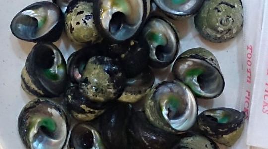 金益現流紅麴鯊魚羹05